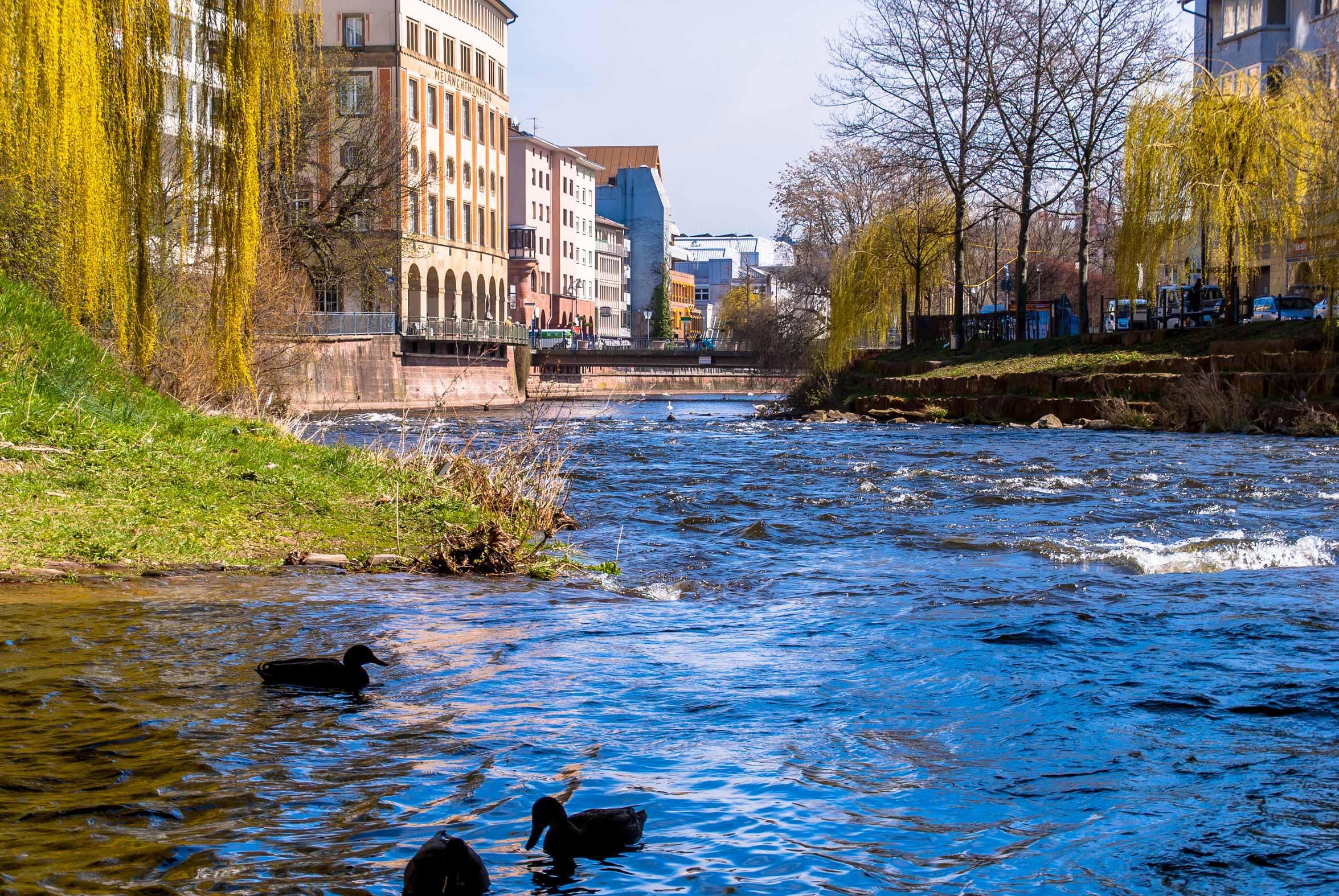 Die-blaue-Enz-mitten-in-Pforzheim